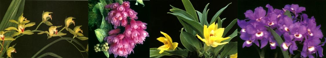 Orchideeën Vereniging Kring Utrecht